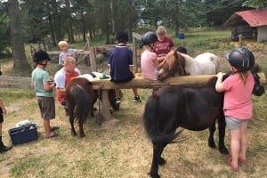 Få en unik oplevelse med heste!